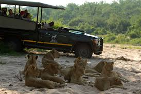 african safari car best time to go on african safari sabi sands lodges reservations