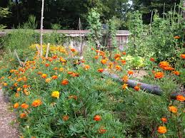 master gardeners of davidson county grassmere historic gardens