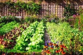 Urban Food Gardens Vegetable Garden Stock Photos Royalty Free Business Images