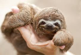 Angry Sloth Meme - 15 unbearably cute sloth pics to celebrate the international