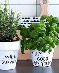 plante aromatique cuisine pot pour plante aromatique interieur plante cuisine message pot