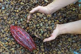 Where Can I Buy Chocolate Rocks Milk Chocolate Is Good For Your Heart Brain Libido And Your