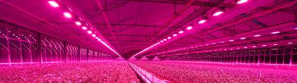 senmatic s led lighting distributors world wide
