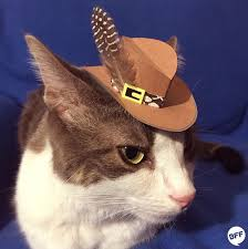Cat Instagram Tiny Hats On Cats U0027 Is Your New Favorite Instagram Account