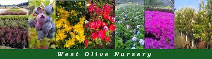 native plant nursery michigan west michigan u0027s nursery landscaping and tree center