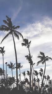 Palm Tree Wallpaper 156 Best Iphone 6 Images On Pinterest Wall Landscapes And Places