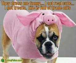 boxer dog sayings 93 best boxer fur babies images on pinterest animals fur babies