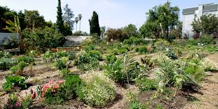 food injustice the revolution starts in the garden huffpost