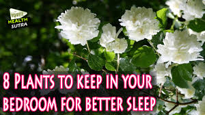 best plants for bedroom 8 plants to keep in your bedroom for better sleep youtube