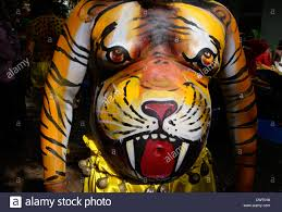 tiger on from pulikali dancer belly stomach in onam