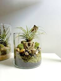 this cylinder vase air plant terrarium by makerskit is perfect