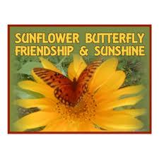 sunflower butterfly friendship postcard zazzle com