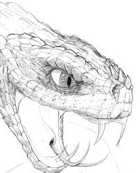 best 25 snake art ideas on pinterest snake design snake