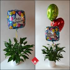 balloon o gram montreal balloons for delivery the flower pot