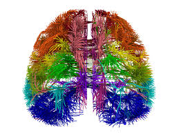 Human Brain Mapping 10 Big Ideas In 10 Years Of Brain Science Scientific American