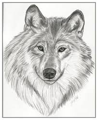 24 best wolfs images on pinterest drawing animals drawings of