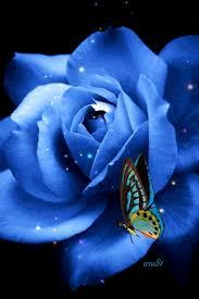 imagenes con flores azules dia de la maestra mariposa animación from nancy pinteres