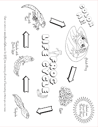 tadpole coloring page free life cycle coloring pages