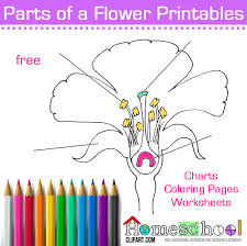 seed plant coloring u0026 worksheet