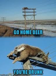 Oh Deer Meme - oh deer imgflip
