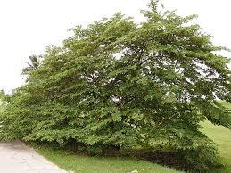 plant plant plants u2026 guai shu shu