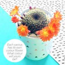 soiled myself again cactus plant pot by paper plane