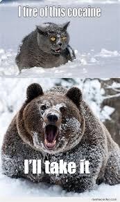 Bear Cocaine Meme - th id oip wfaei8la6ht7 h34f zvyghamh