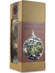 air plant terrarium kit hanging terrarium hanging glass terrarium
