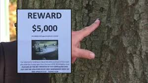 fined thousands for stapling fliers to trees looking