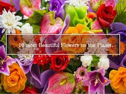 most beautiful flower arrangements beautiful flowers 10 most beautiful flowers in the world world flowers list beauti