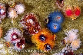tree rock coral rainforest islands ferry