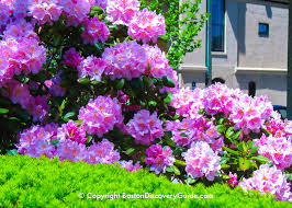 boston flowers flowers in boston garden tours boston discovery guide