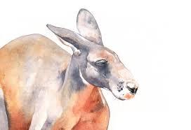 kangaroo watercolor painting k089 print of watercolor