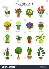 most popular flowers houseplants collection vector illustration most popular stock