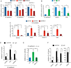 gata6 regulates emt and tumour dissemination and is a marker of