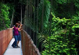 Hidden Canopy Treehouse Monteverde by What U0027s Happening In Monteverde Cr Traveler