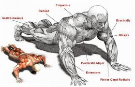how to get bigger arms with push ups fitness and power