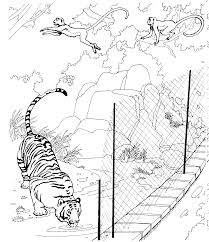tiger coloring book pages innovative zoo coloring page best coloring boo 5297 unknown