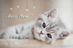 wallpaper cat whatsapp i miss you hd images hd wallpapers pictures photos cover images for