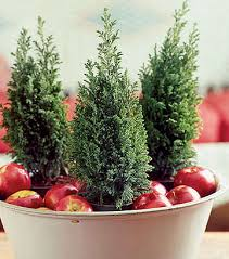 small wedding ideas small fir trees add a cristmas theme to your