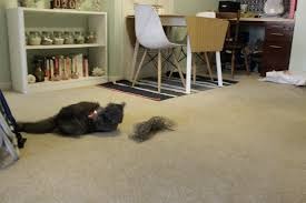 How To Get Dog Urine Out Of Laminate Flooring Rachael Ray Nutrish U2022 Charleston Crafted