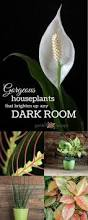 12 Best Plants That Can by Pin 11 Plants That Will Grow In The Bathroom Plant Me