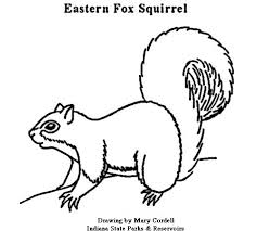 fox racing coloring pages dnr coloring pages animals