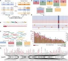 Dna Mapping Genome Evolution And Meiotic Maps By Massively Parallel Dna