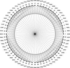 evolution of the genetic code through progressive symmetry