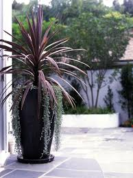 Indoor Tropical Plants For Sale - best 25 outdoor potted plants ideas on pinterest potted plants
