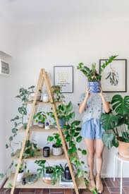 plants indoor house plant supports pictures plant decorating