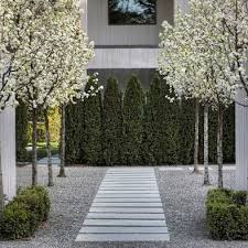 37 best pleached trees images on pinterest landscaping modern