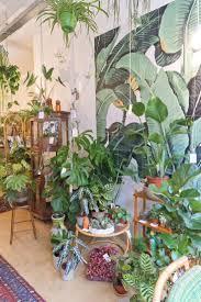 Interior Garden Plants 1902 Best Botanical I N D O O R S Images On Pinterest Plants