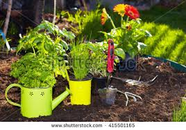 summer vegetable garden stock images royalty free images